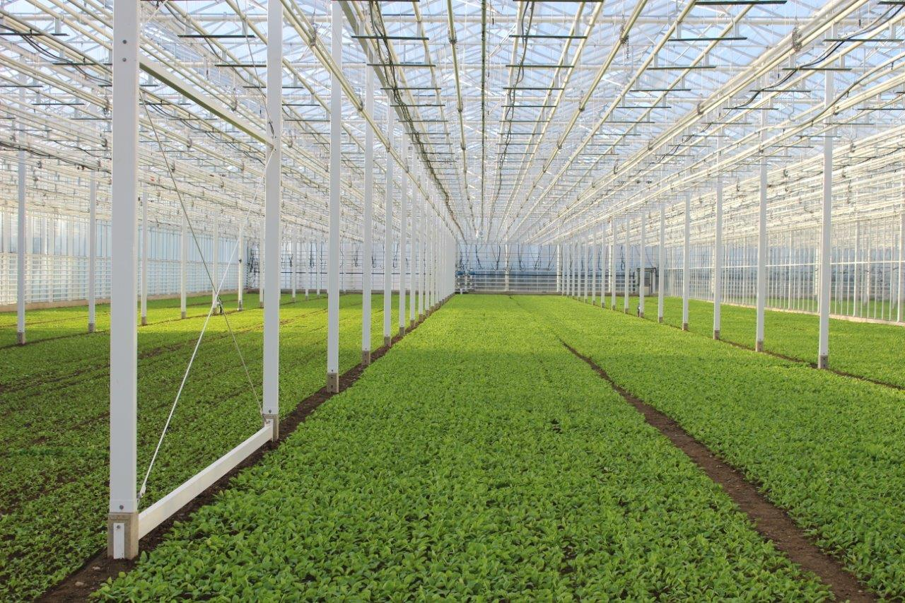 Greenhouse Beerstecher in Hinwil