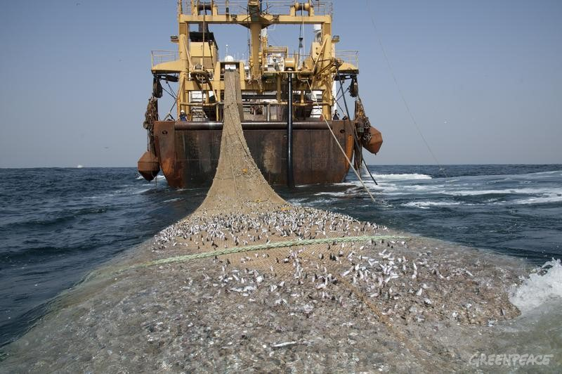 This is how unsustainable fishing looks like.