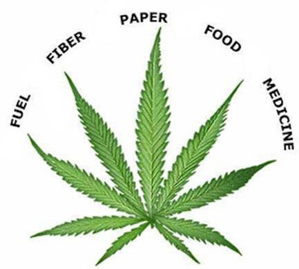 Paper production through hemp - an alternative?