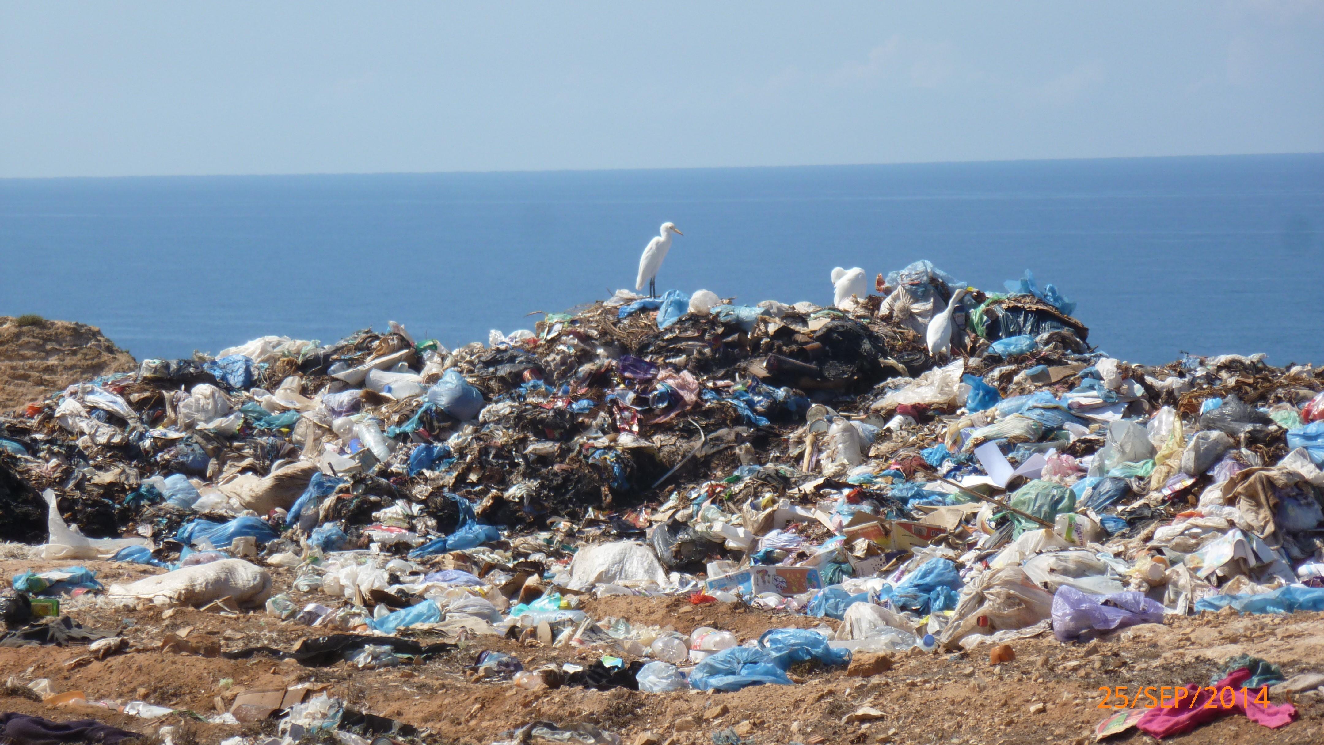 Help Clean the Ocean and Coastlines