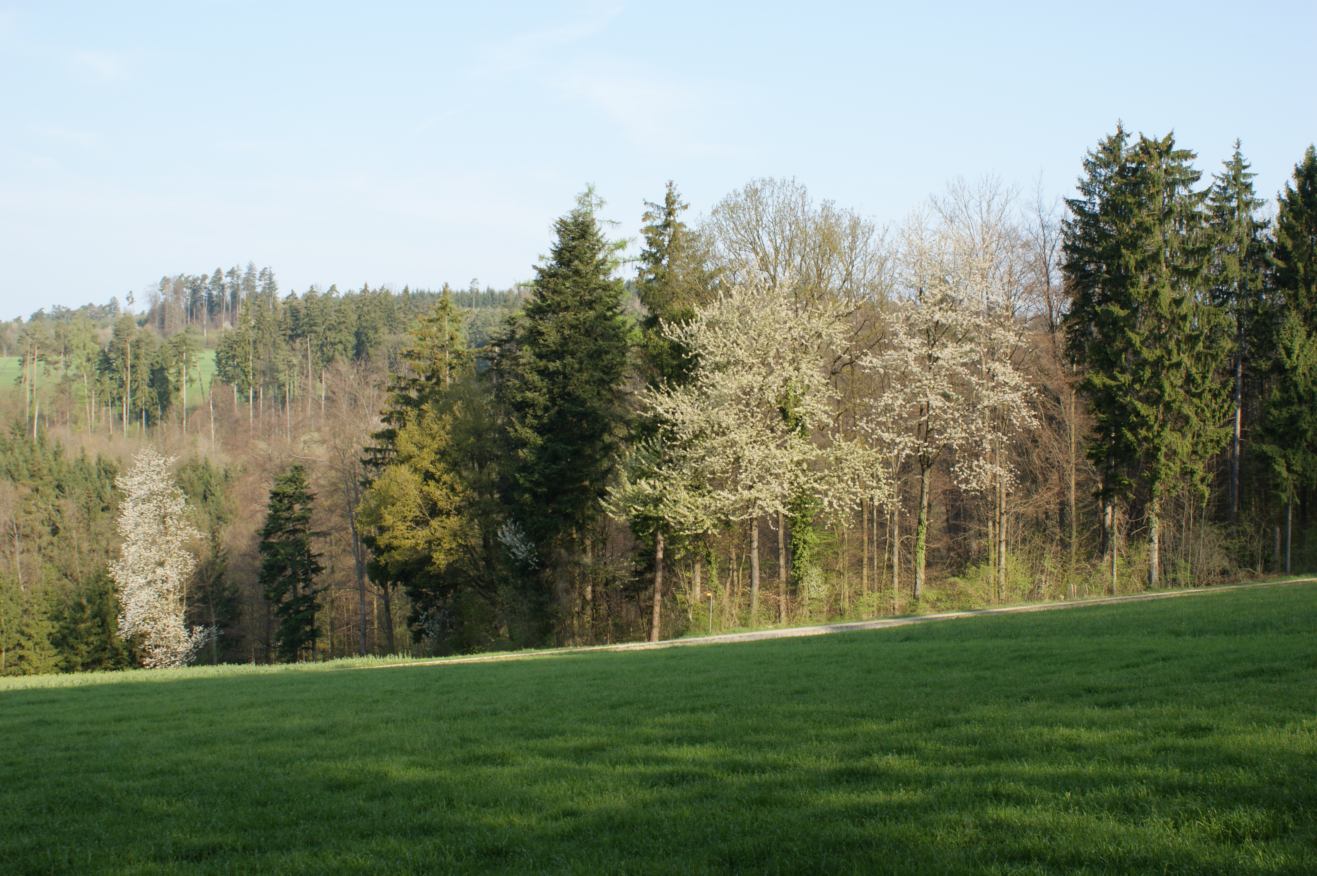Forests – why are they so important for us?