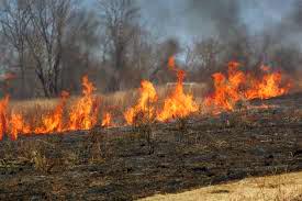 stubble flames