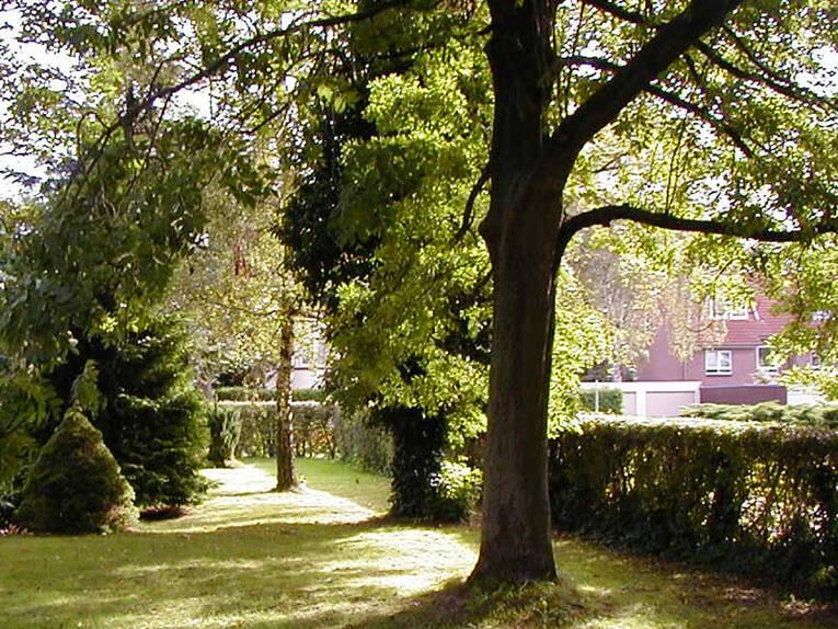 Tree in Wetzikon Zurich (CH)