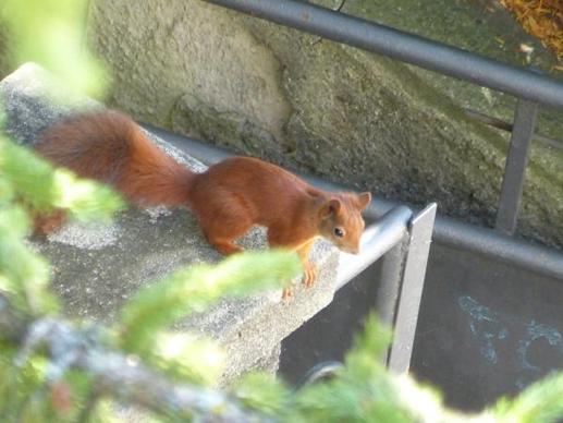 [1] Squirrel