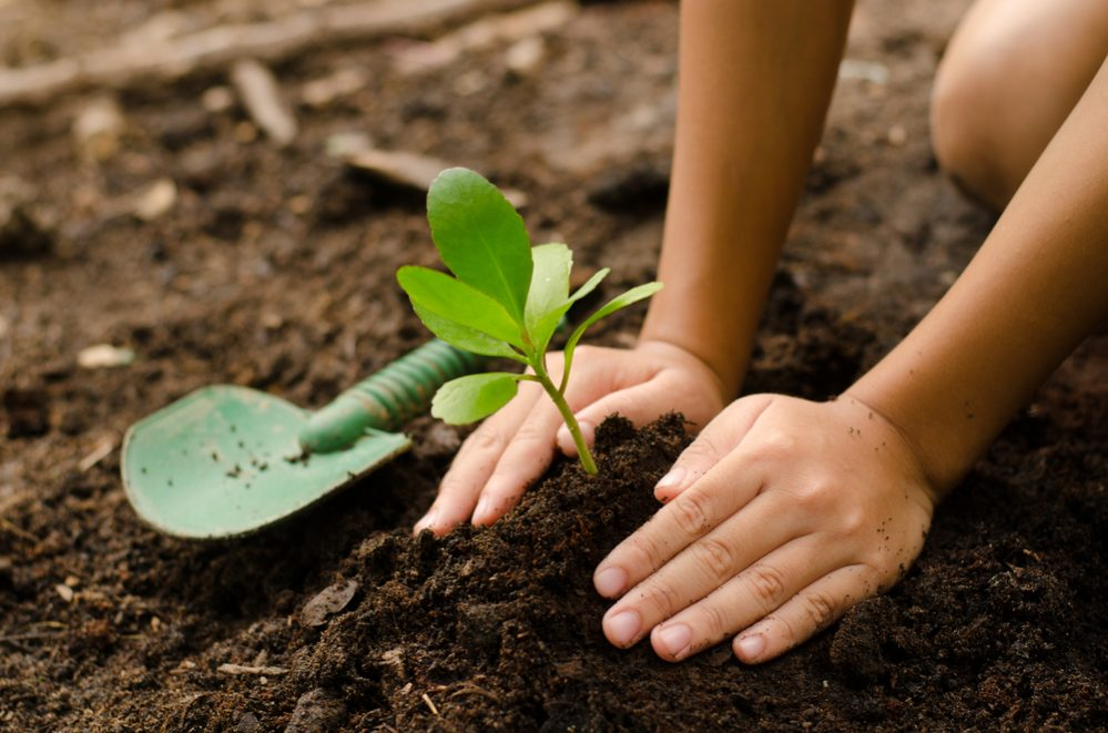 Composting for your own garden.